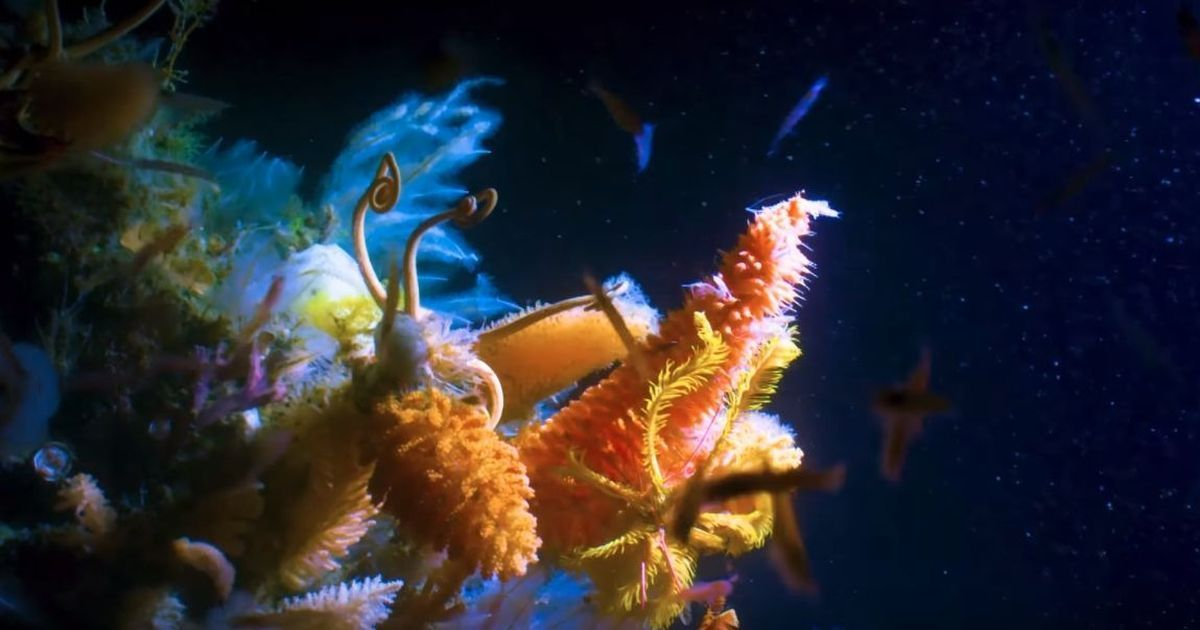Film based on 'Blue Planet II' to be released in Indian theatres on May 18