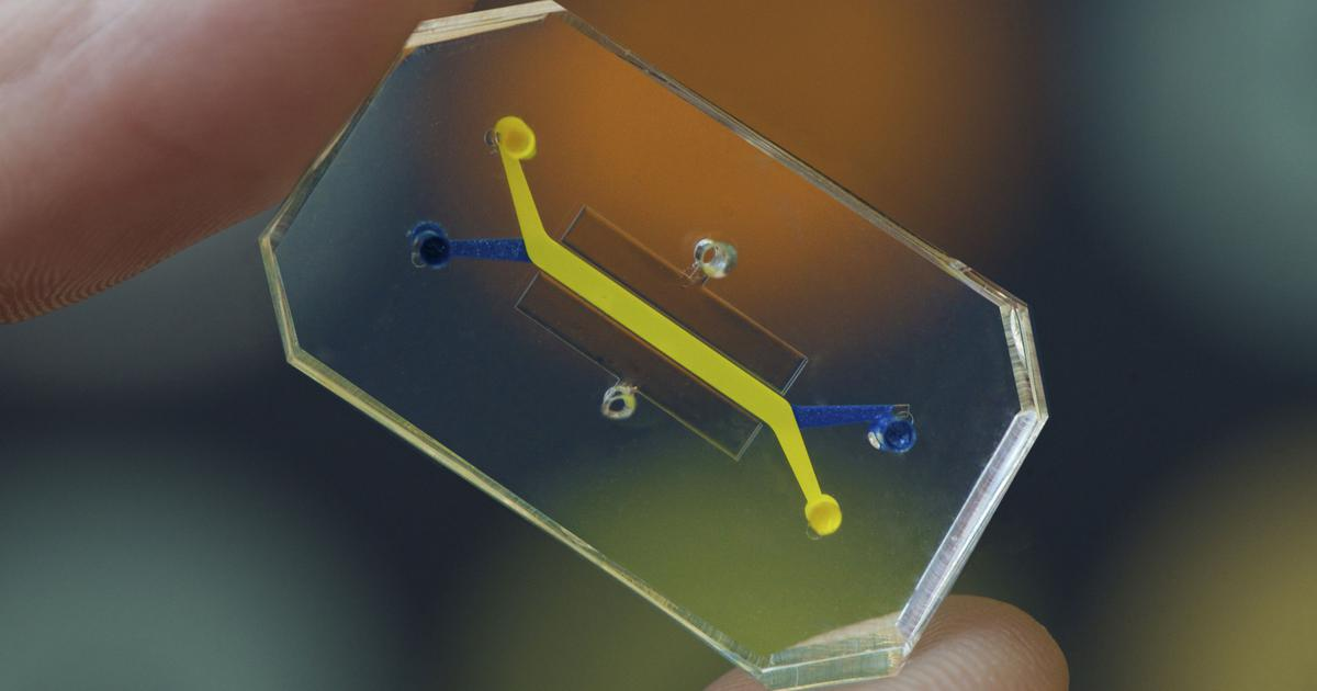 Scientists are creating organs on chips to study the human body better