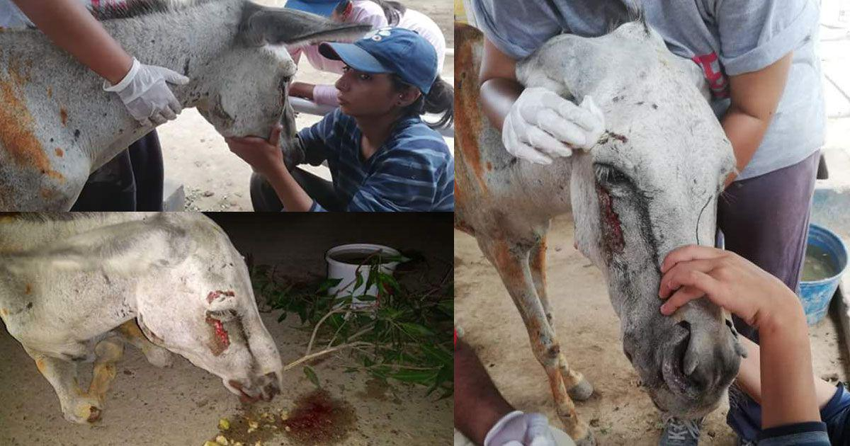 What the torture of a donkey by suspected political workers says about Pakistan's democracy
