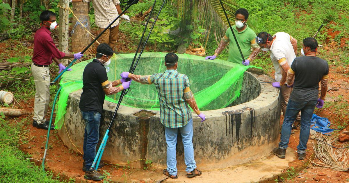 Image result for nipah virus kerala