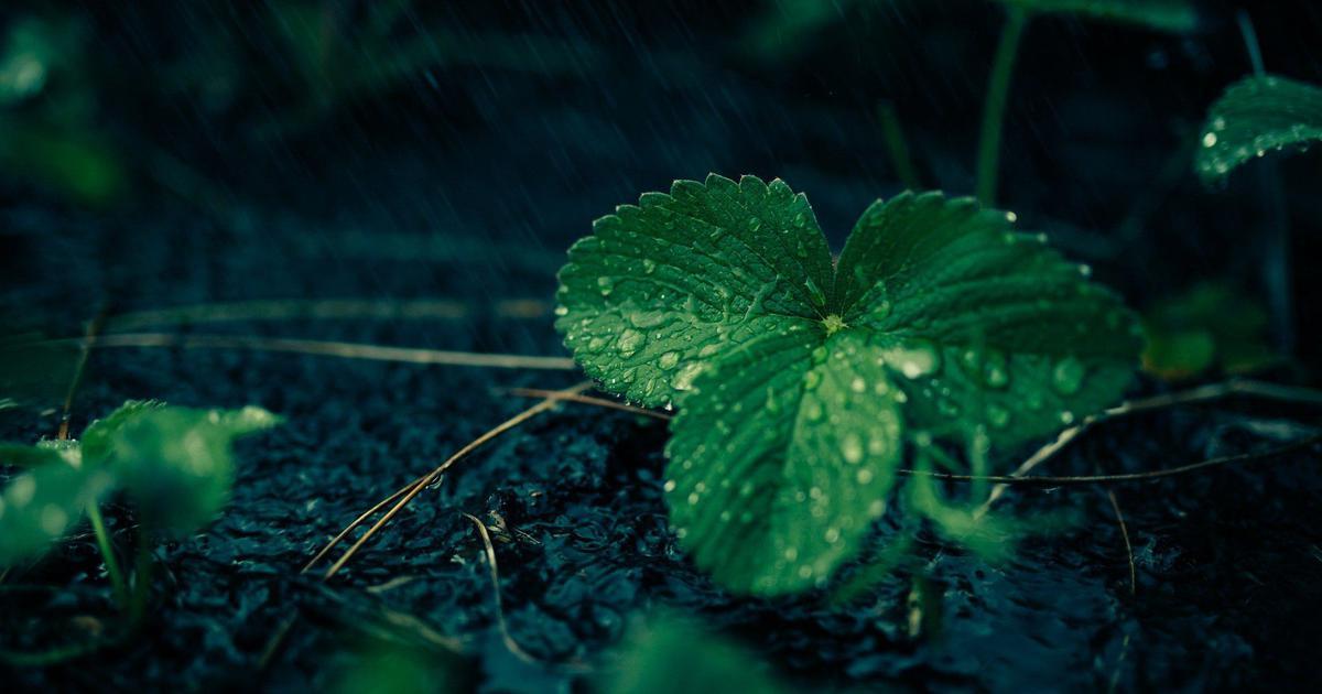 कविता भाषा, स्मृति और प्रकृति को बचाने की स्वाभाविक विधा है