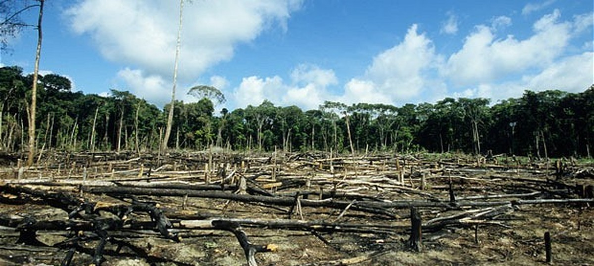 Just 6% of funds to repair destroyed forests have been