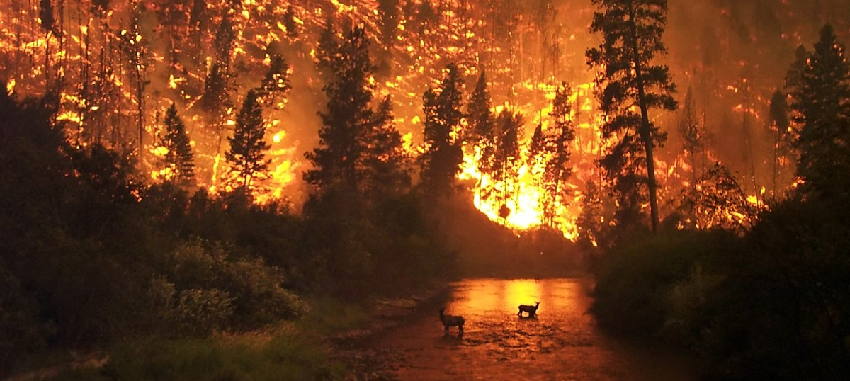 Wildfires in the US have become bigger, more frequent and longer