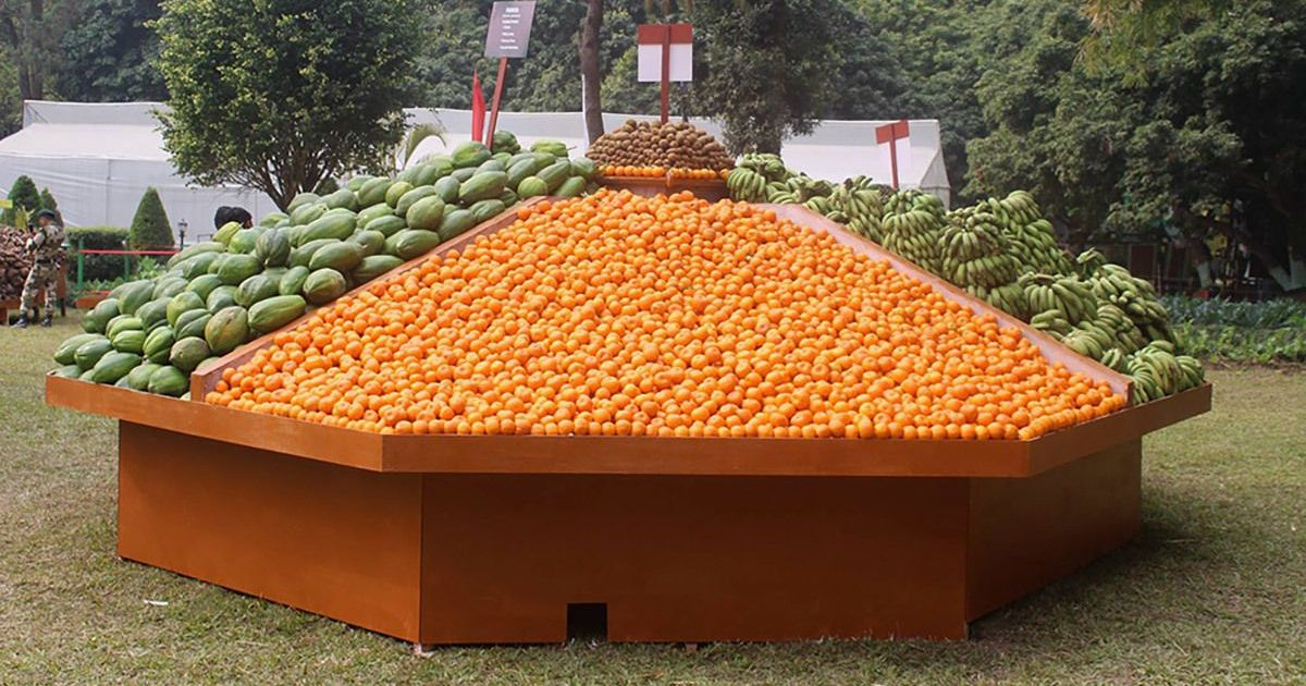 Sikkim's switch to organic farming yielded none of the promised fruits for its orange growers