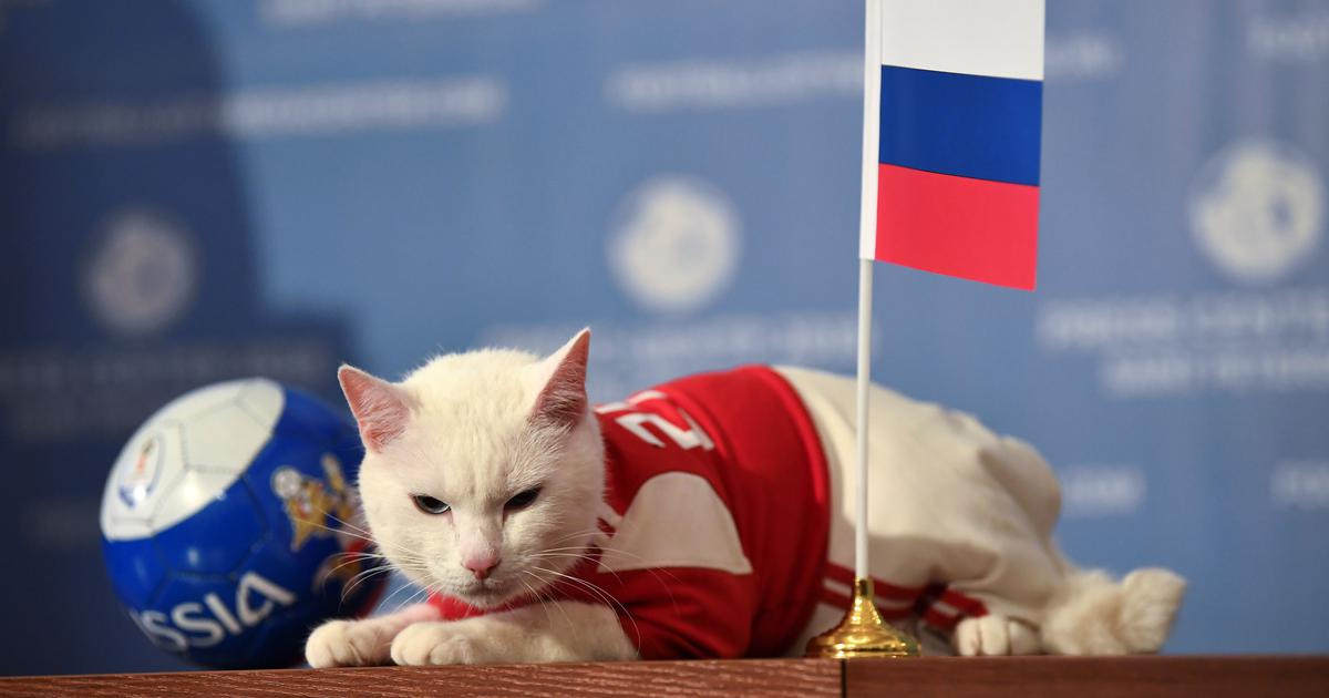 Russia to win World Cup opener, predicts Achilles the clairvoyant cat