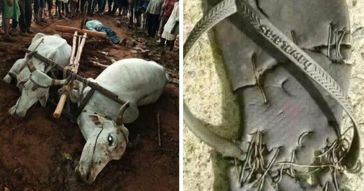 'भूख से मरे' इस किसान और उसके बैलों का इस चप्पल से क्या संबंध है?