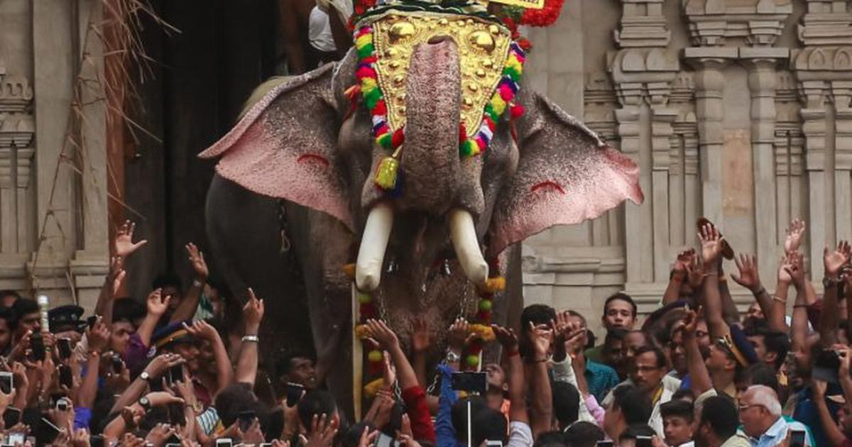 Kerala temple festival: As ban on celebrity elephant is lifted, spotlight moves to stress on animals