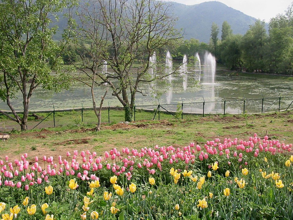 Tulip Garden in March. Image credit: Anuradha Chaturvedi
