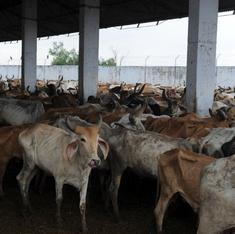 What's wrong with the environment ministry's proposal to spend Rs 20 lakh on a cow-shelter seminar