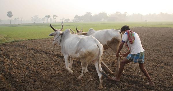India's real skills challenge: 263 million farm workers