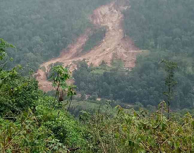 Deforestation in Kodagu is cryptic and happens below the canopy. (Photo credit: Gayatri Gulati)
