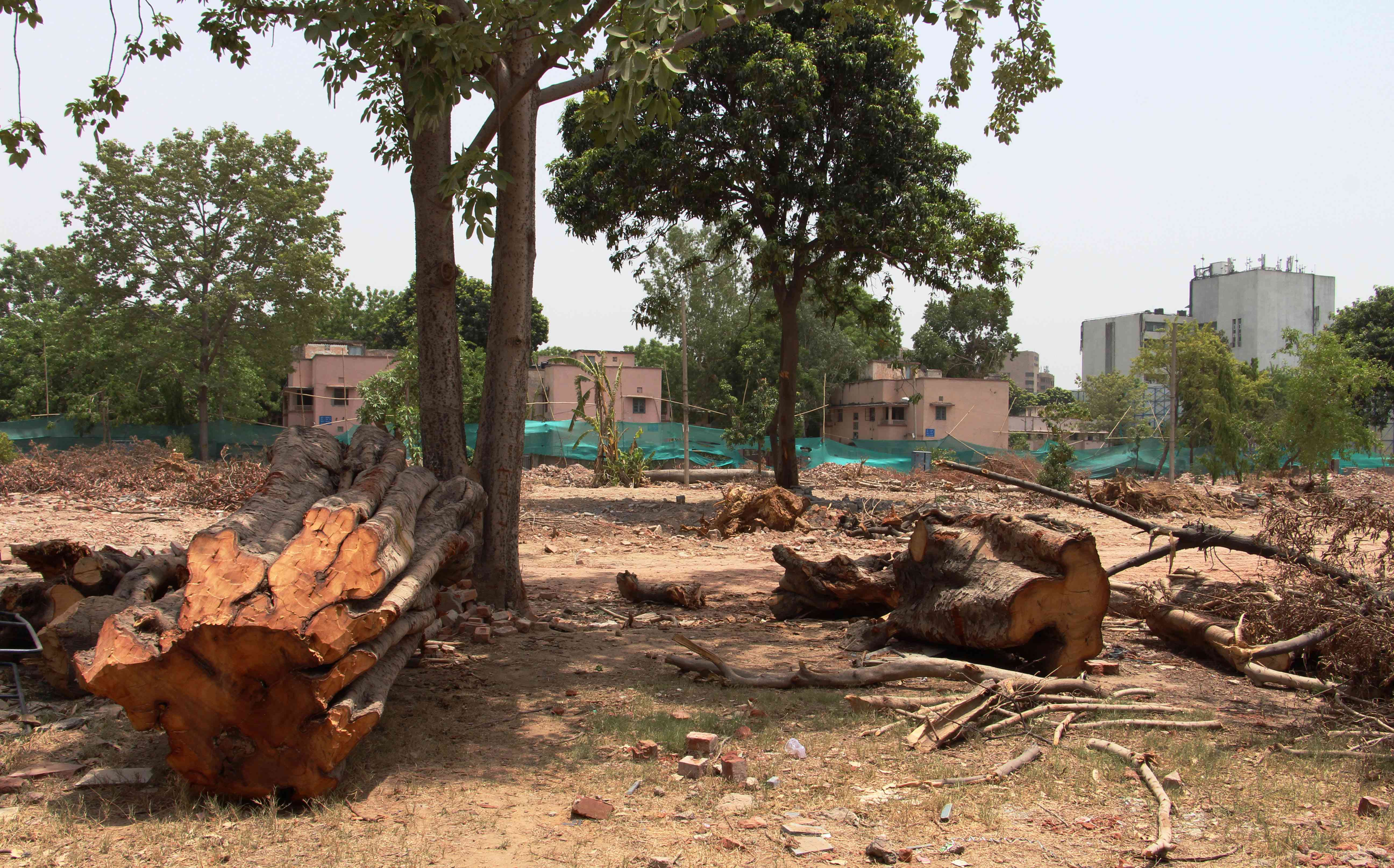 In Delhi's Netaji Nagar, a large number of trees have been felled to make space for buildings. (Photo credit: Aabid Shafi).