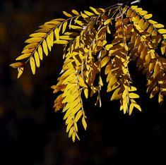 क्या पेड़-पौधों से मिले संकेत मॉनसून की सटीक भविष्यवाणी कर सकते हैं?