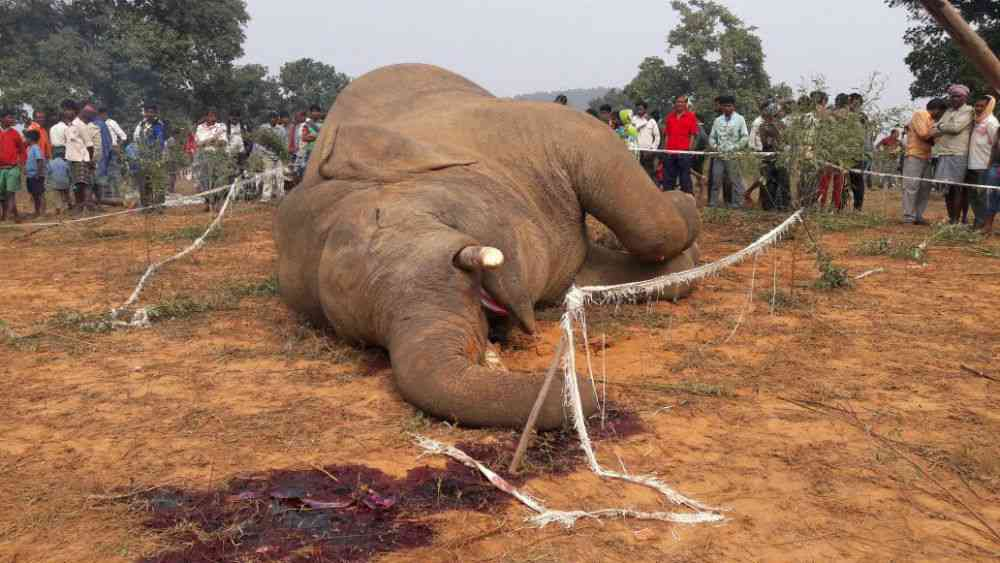 Crowds gather around the body of a tusker that was electrocuted by high-voltage fencing erected around crops in the Dharamjaigarh block of Chhattisgarh. Poor farmers and villagers in the state bear the deadly brunt of a conflict brought about by the destruction of natural habitats by coal conglomerates. In 2010, media reports brought to light how the state government quietly shelved an approved proposal to notify the 450 sq km Lemru Elephant Reserve after discovering that its forests were coal bearing, and later allocated six forest compartments of the reserve to a coal conglomerate. Photo credit: Sajal Madhu