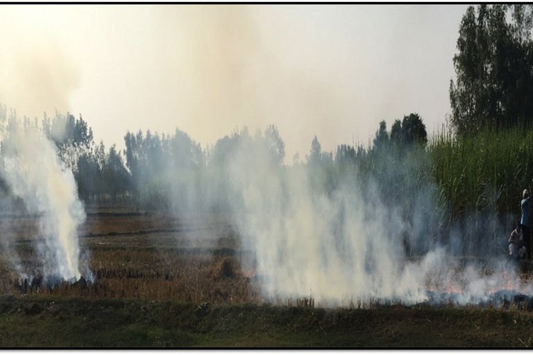 Smoke from rice residues burnt by farmers in Tilhar, a small town in the district Shahjahanpur, Uttar Pradesh. Photo Credit: Akshansha Chauhan