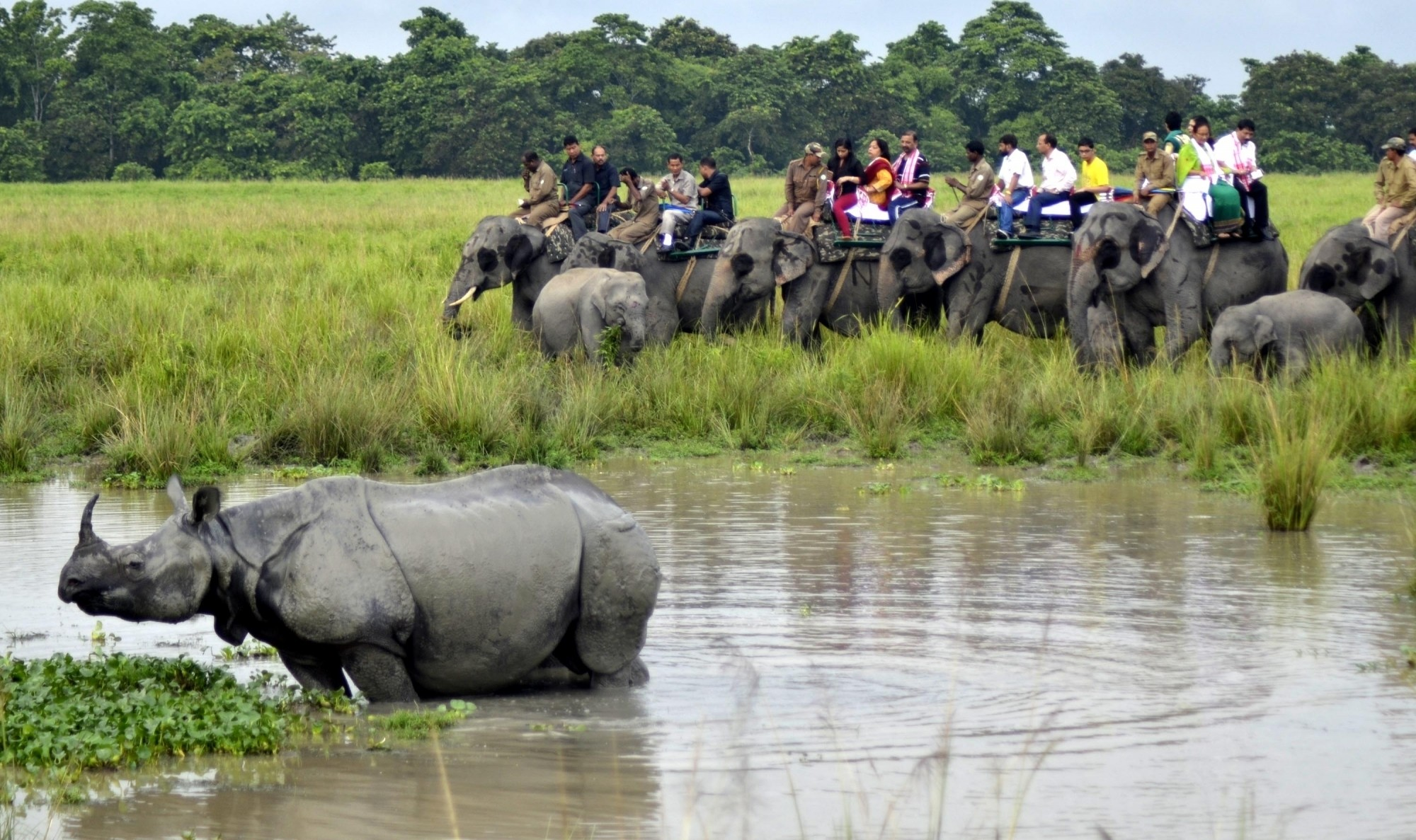 Kaziranga National Park. Photo credit: IANS