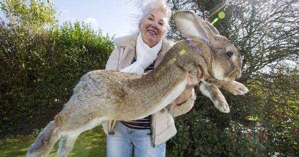 World's largest rabbit dies in transatlantic United Airlines flight