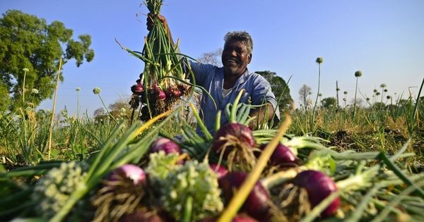 Tears of joy: How onion farming is helping Madhya Pradesh's Korku Adivasis tide over drought