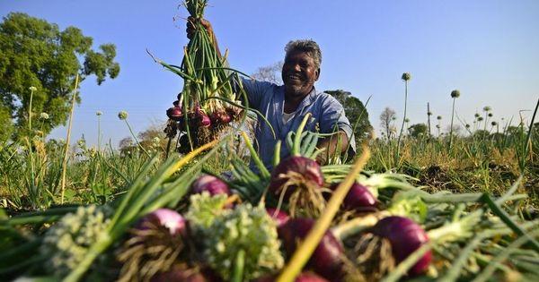 Tears of joy: How onion farming is helping Madhya Pradesh's Korku Adivasis tide over drought