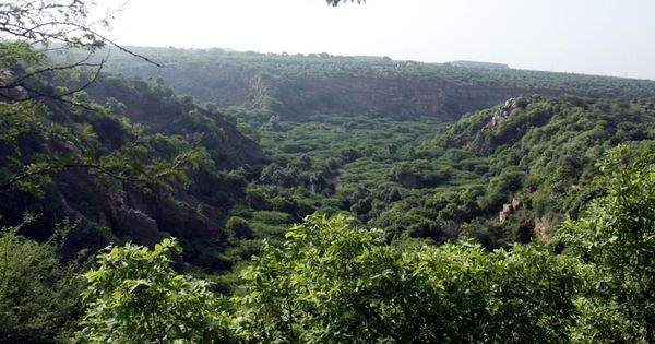Haryana government backed a real estate firm that wanted to cut trees in the protected Aravallis