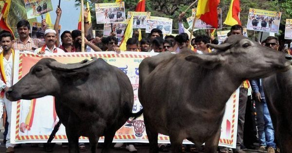 'This is dictatorial': In Kerala, Bengal and North East, new cattle rules meet with opposition