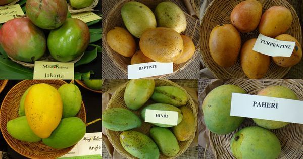 From prawn curries to fasting food, how Indians eat their mangoes (and have them too)