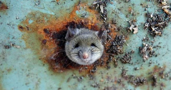 Watch: Can rat excreta on soda cans kill you? Not quite