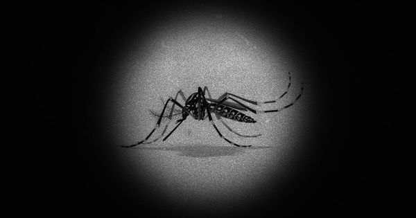 Watch: How to outsmart the mosquito that is responsible for dengue and chikungunya?