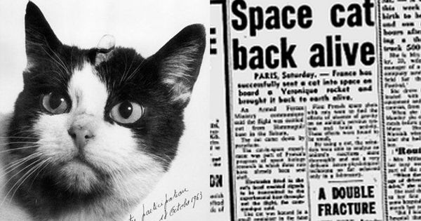 Watch: How the French launched a stray cat into space
