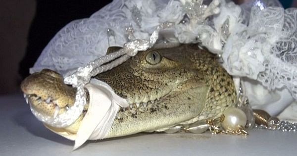Watch: This Mexican mayor married a crocodile