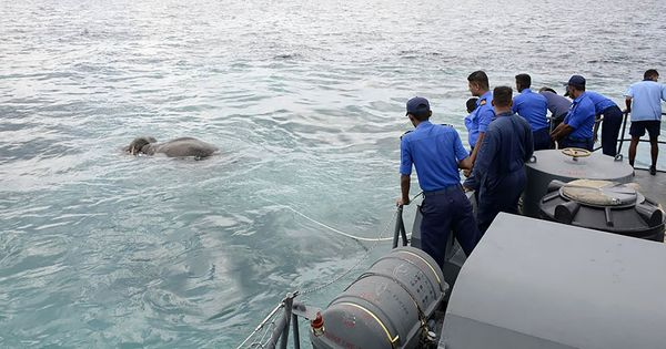 Watch: Sri Lankan Navy rescues an elephant stranded in the Indian Ocean