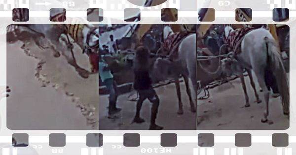 Watch: Groom and horse are rescued after falling into a well during pre-wedding rituals. Yes, really