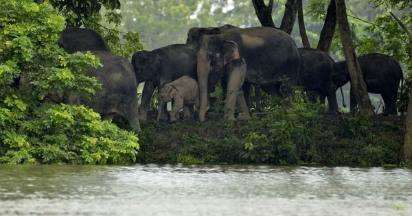 Assam: More than 330 animals dead at Kaziranga National Park in two waves of floods