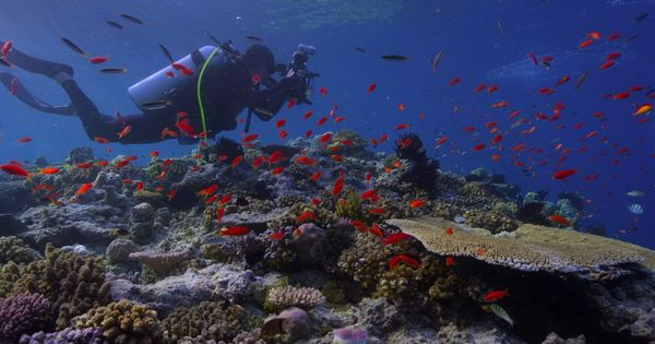 'Chasing Coral' documentary is a reminder that natural beauty comes with an expiry date