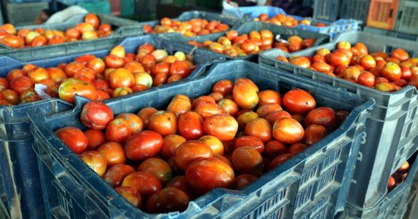 Mumbai: Dahisar Police arrest man for stealing 60 crates of tomatoes worth Rs 60,000