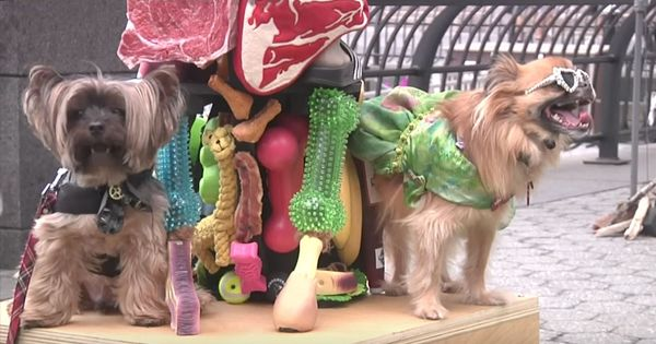 Watch: New York had an art exhibition exclusively for dogs (and the tails couldn't stop wagging)