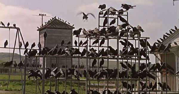 BBC to adapt Alfred Hitchcock's 'The Birds' into a TV show