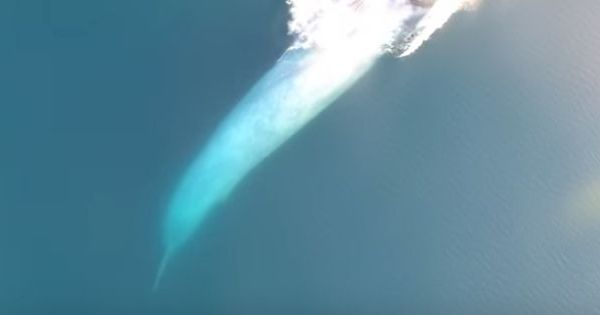 Watch a blue whale swallowing its prey. You cannot imagine the calculations it has to make