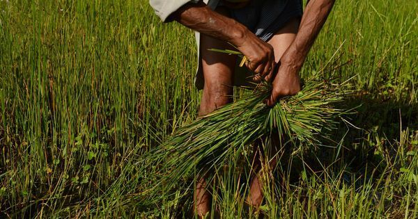 Cash transfers to farmers are a temporary fix. India must pursue structural reforms in agriculture