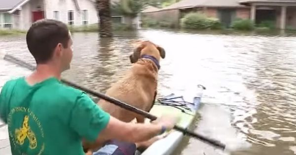 Videos: Not just humans, this is how the storm in Texas has made animals homeless too