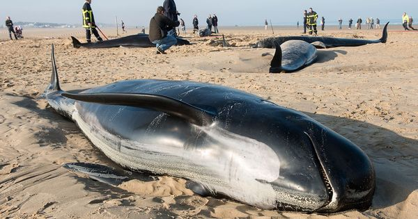 Whale strandings: Could solar storms that cause the northern lights be to blame?