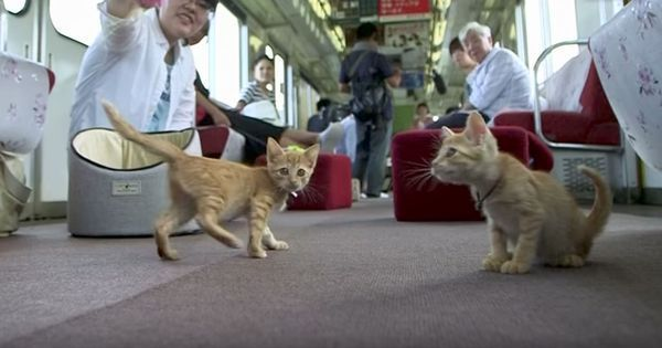 Watch: Neighbourhood cat cafes become old news as Japan tries out its first cat cafe on a train