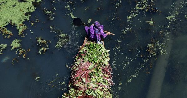 The reason why Kashmir's stunning Wular Lake is shrinking: Willow trees