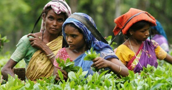 In Assam, a panel has been set up to fix the minimum wages of Assam's tea workers. But will it help?