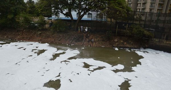 'The largest septic tank of the city': Bengaluru's Bellandur lake froths again
