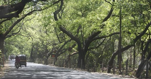 Bombay High Court agrees to examine whether city's Aarey Colony can be saved from metro shed project