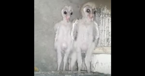 Watch: What is the truth behind the 'aliens' supposedly spotted in Visakhapatnam?