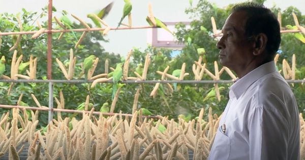 Watch: Meet the man from Gujarat who feeds over 2000 birds every morning with help from his family