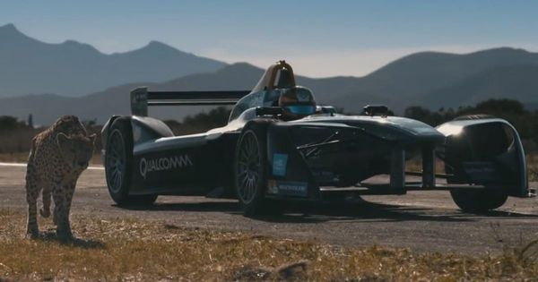 Video: Who would win in a race - a cheetah or a Formula E Car?
