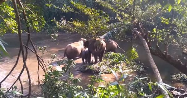 Watch: Foresters in Kerala rescued a baby elephant stuck in mud hole and earned a grateful gesture